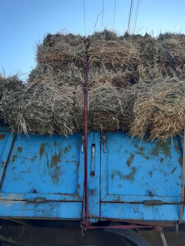 Животные - Кадамжай: 97 шт.пресс чоп сатылат Фуркат Кыргыз-Чекте келишим баада