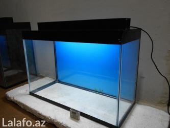 Bakı şəhərində Akvarium teze hazirlanip 60 litre