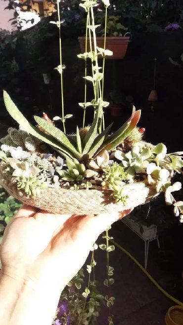 Trajni aranzmani od sukulenata i kaktusa, idealni za uredjenje Vaseg