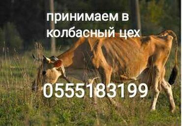 КОЛБАСНЫЙ ЦЕХ прием коров лошадей и телок