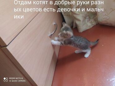 Животные - Мыкан: От дам котят в хорошие руки очень красивые разных цветов есть полосати