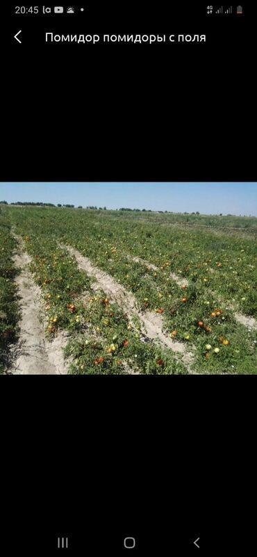 Продам 3 соток Для сельского хозяйства от собственника