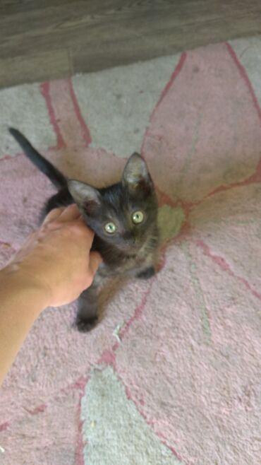 Отдам котенка в добрые руки! Игривый,ходит в туалет на улицу,либо в