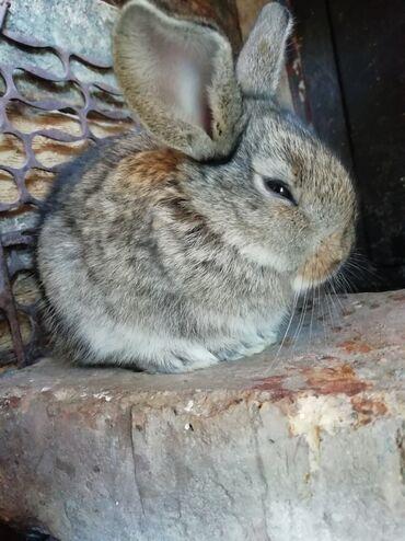 Другие животные - Беловодское: Другие животные