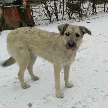 Пропала крупная собака в районе первого Ала-Арчинского водохранилища