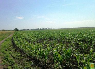 Продаю орошаемую землю 1,8 га поливное поле село Озерное в Бишкек