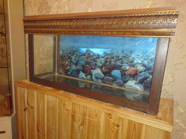 Bakı şəhərində Akvarium 80x25x40