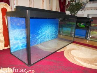 Bakı şəhərində 8 mml wuweyle teze akvarium  220 litrelik