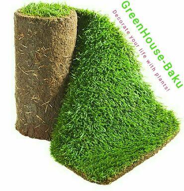 GreenHouseBaku - Мы украсим Вашу жизнь цветами!1.Многолетний опыт