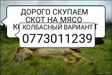 Флипчарты 120 х 225 см лаковые - Кыргызстан: В колбасный цех на мясо принимаем скот
