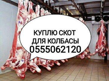 животн в Кыргызстан: Куплю коров лошадей бычков и тёлок в колбасный цех в любом видепо