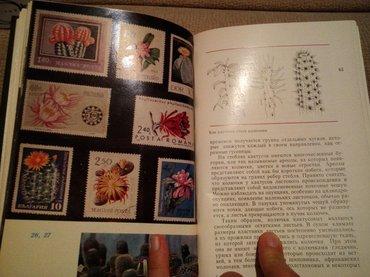 """Продаю книгу """"Кактусы"""", все о цветах и их уходе, выращивании. в Бишкек"""