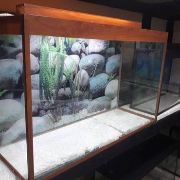 Bakı şəhərində 120 litrelik akvarium teze hazirlanip seliqeli ve en esasi keyfiiyetli