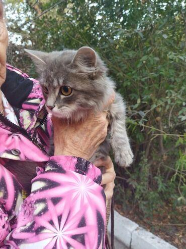 88 объявлений   ЖИВОТНЫЕ: Пристраивается котёнок в добрые руки, девочка. Возрост около 3-4 месяц