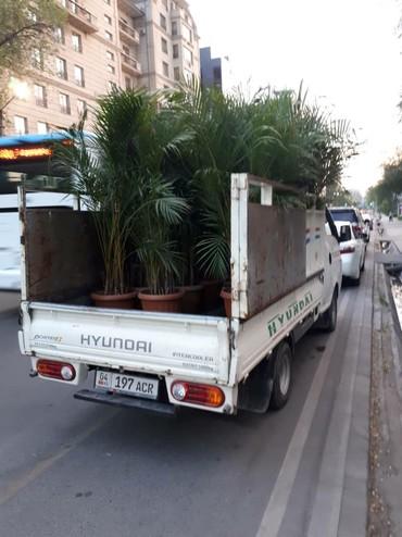 Портер такси по городу 450 сом за один в Бишкек