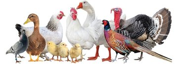 Витамины для цыплят утят индюшат   супер концентрат витамины и аминоки