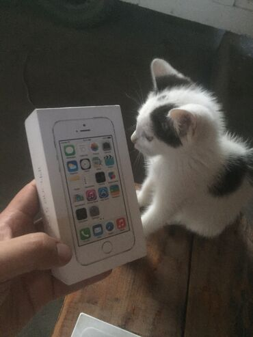 Apple Iphone - Бишкек: Б/У iPhone 6 64 ГБ Белый