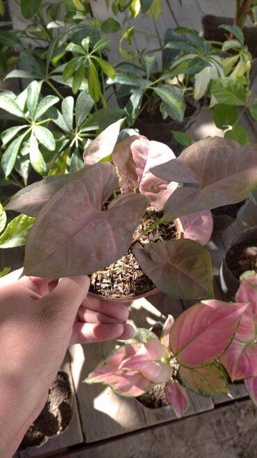 Горшки для растений