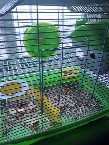 Джунгарские хомяки,2 штуки,мальчик и девочка, 4 месяца.с клеткой