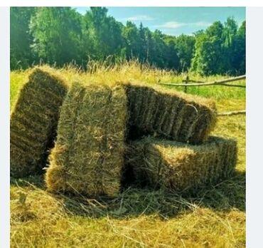 Зоотовары - Кыргызстан: Продаю сено экспорцеп тюки горный 180 сом 1000 шт можно бартер на кой