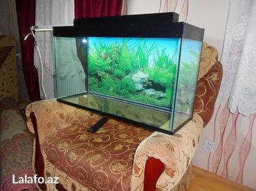 Bakı şəhərində Teze akvariumlar 6mml wuwenin qalinliqi