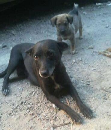 Фонд помощи животным Добрые руки ищет хозяина для двухлетней собаки
