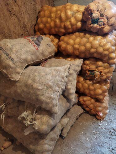 212 объявлений: Урон Урук семена картошка Пикассо 2018 гарантия