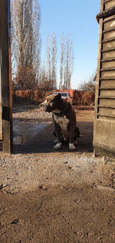 кабели синхронизации carprie в Кыргызстан: Кабель Для вязки не продаётся