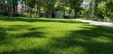 профессиональная стрижка газонов в Кыргызстан: Газон для детского садика