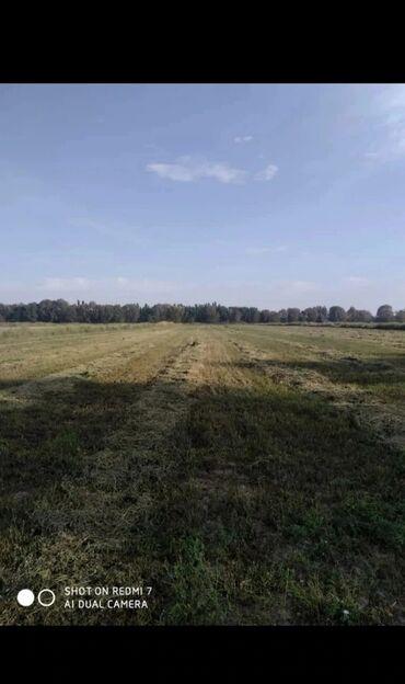 412 москвич купить в Ак-Джол: Продам 2000 соток Для сельского хозяйства от собственника