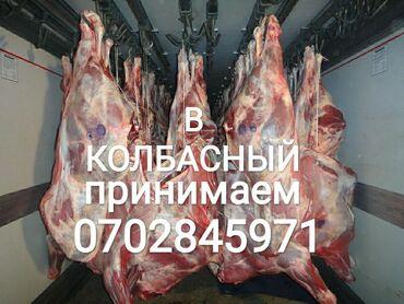 купить участок село байтик в Кыргызстан: Принимаем скот в колбасный цех коров лошадей бычков и телоклюбой
