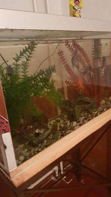 Гор Ош аквариум, полный комплект, с в Ош