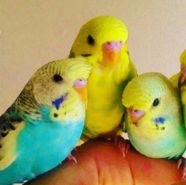 Попугаи разных видов. Хорошо учатся говорить и приручаются к рукам. В