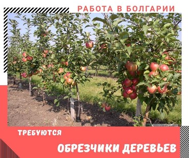 Работа обрезчики деревьев в Болгарии Мужчины и Женщины от 400 евро