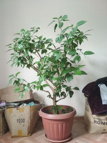 Продаю домашние растения !!!