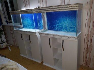 Bakı şəhərində Versage akvarium ve mebeli ile birlikde