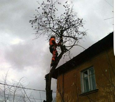 Снос аварийных деревьев в Бишкек