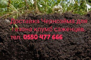 Доставка Чернозёма для саженцев газона и клумб.А/м Зил 8