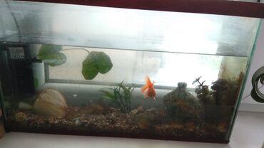 760 объявлений: Продаю аквариум с фильтром и рыбкой