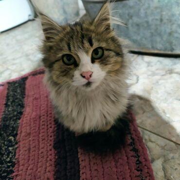 242 объявлений | ЖИВОТНЫЕ: Отдам в хорошие руки кошку, 4 месяца,Очень активная, игривая, легко