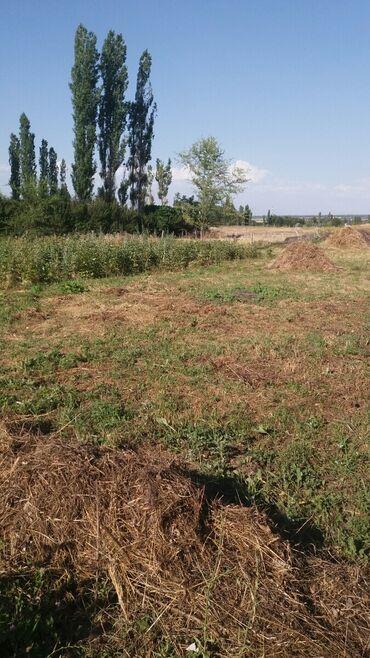 Недвижимость - Кызыл-Туу: 20 соток, Для сельского хозяйства