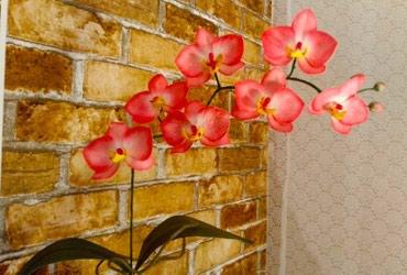 Орхидеи на заказ. в Кок-Ой