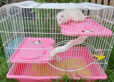 Клетка для крысы, хомяка.3 этажаИмеется еще много принадлежностей