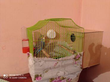 Qadınlar üçün duvaqlı papaqlar - Azərbaycan: Hazr cütleri herşey üstünde verilir qefes+ su qabı+yumurtalamaq ücün