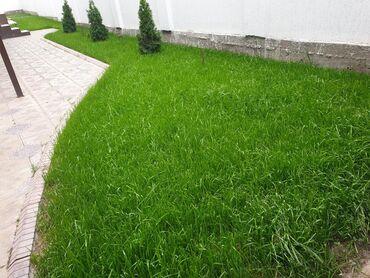 жидкий газон бишкек в Кыргызстан: Газон в Бишкеке Хотите Шикарный газон У нас действует акция!!До конца