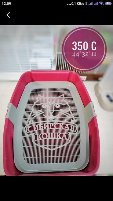купить для собаки в Кыргызстан: Куплю лоток для кошки или собаки большой не дорого