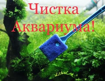 Другие услуги в Кыргызстан: Предлагаем услуги по чистке аквариумов. профессиональный подход наших
