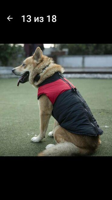 Продаётся курточка на крупную собаку.Заказывали с сайта для себя, но