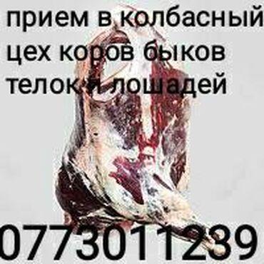 802 объявлений   ЖИВОТНЫЕ: Куплю в колбасный цех коров лошадей быков и телок на мясо