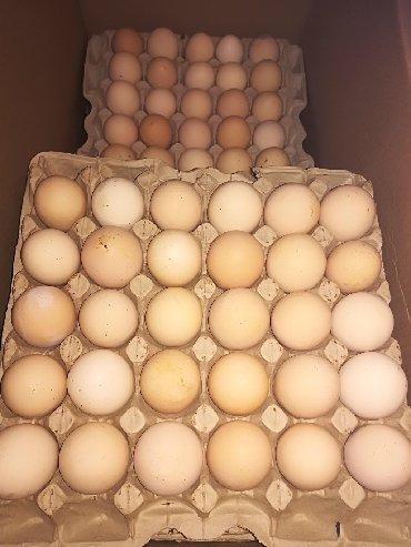 Продаю | Инкубационные яйца | Бройлерная, РОСС 308, Арбор айкрес | На забой, Для разведения, Несушки
